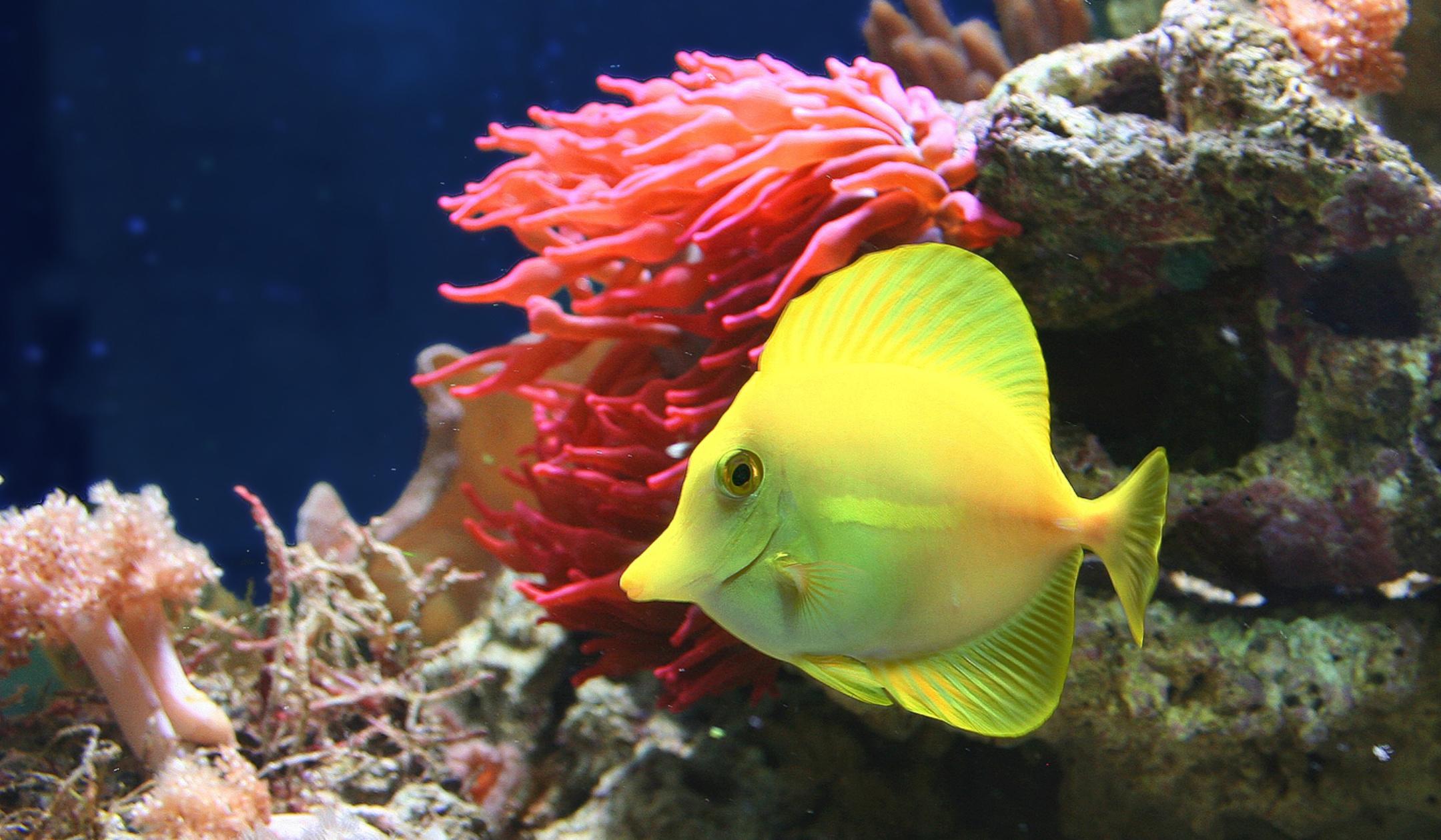 Korallenbecken