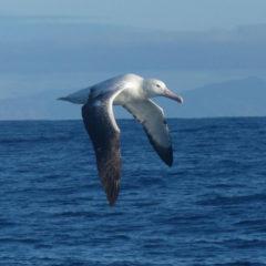 PM Albatros 17.07.2019