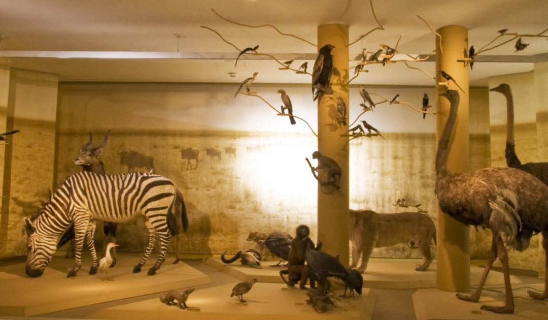 Savannenausstellung