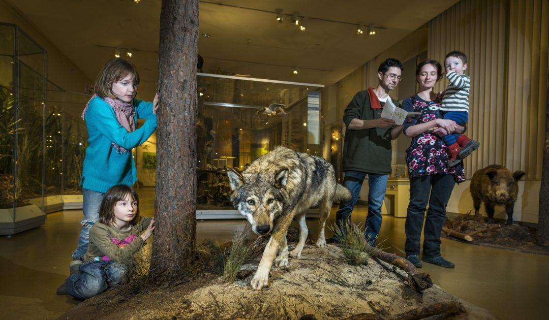 Senckenberg Museum für Naturkunde Görlitz Dauerausstellung Oberlausitz Familie