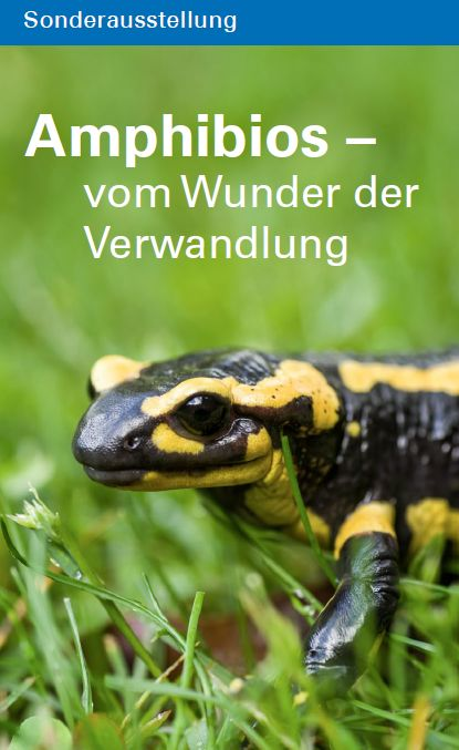 Sonderausstellung Amphibios Titelbild
