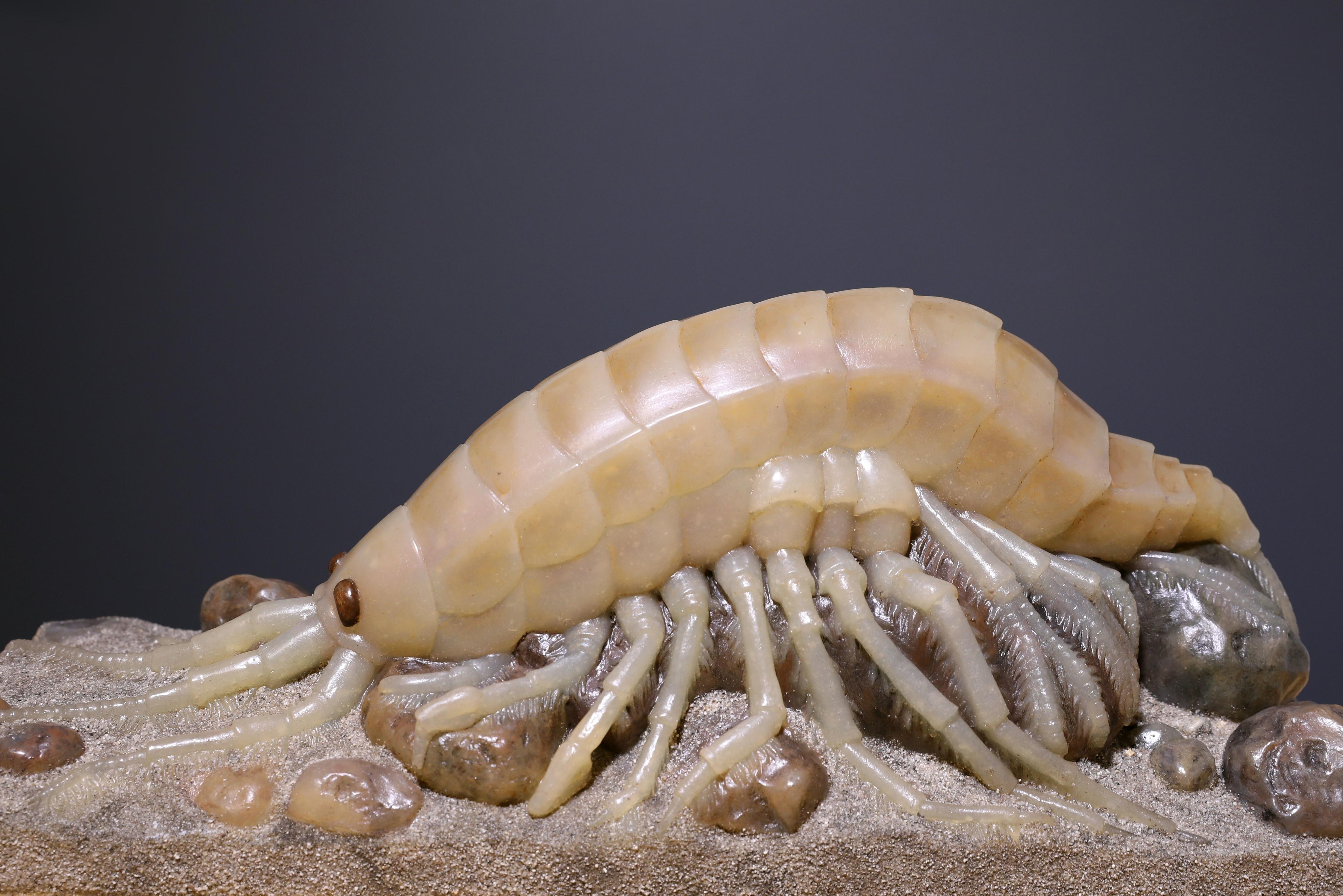Modell eines Bachflohkrebses zum Anfassen