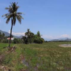 Südvietnam - Reisfelder bei Hoi Xuong pan