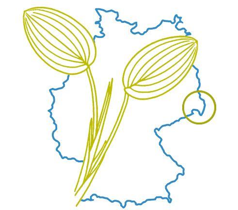 Logo Virtuelles Lausitz Herbarium