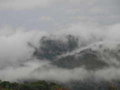 pm angola regenwald 22.6.2020