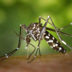 pm ausbreitung invasiver arten 26.6.2020