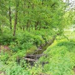 Lausenbach_DD Heide