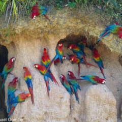 pm Amazonas Schatzkammer der Welt 16.9.2020