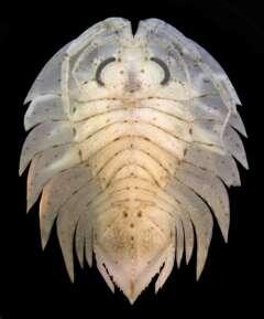 Marine Zoologie