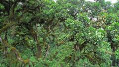 Mrusunga Forest